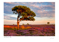 Tree and heather